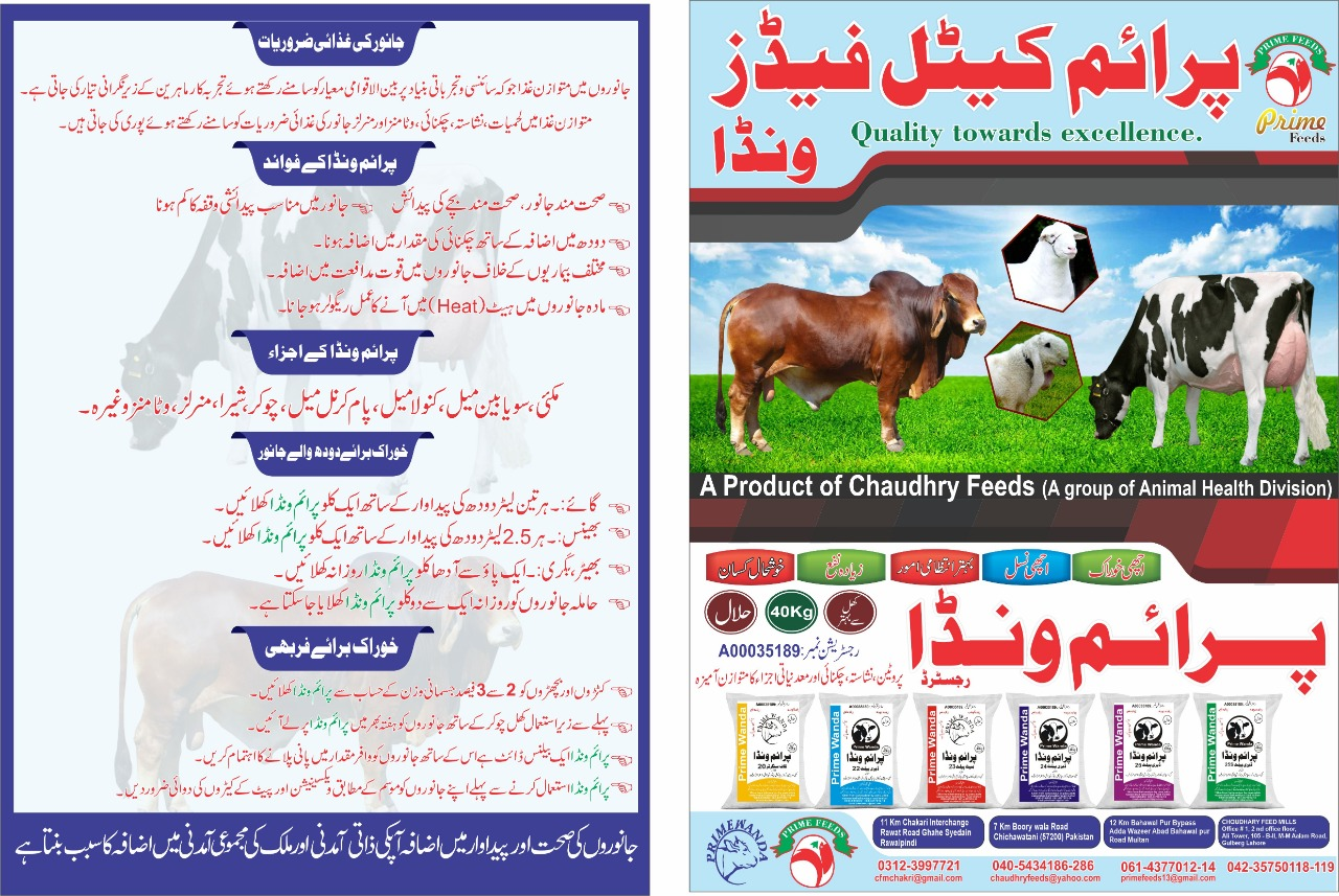 Cattle feeds in Pakistan